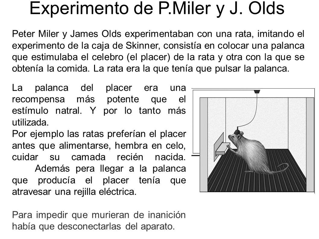 Experimento de P.Miler y J. Olds La palanca del placer era una recompensa más potente que el estímulo natral. Y por lo tanto más utilizada. Por ejempl