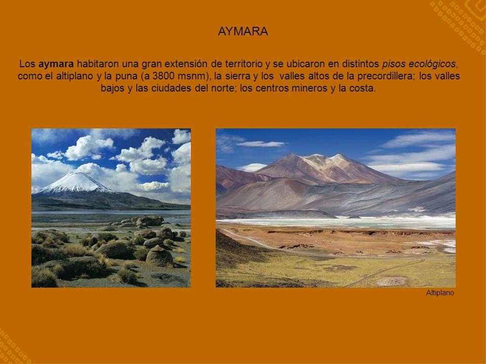 AYMARA Los aymara habitaron una gran extensión de territorio y se ubicaron en distintos pisos ecológicos, como el altiplano y la puna (a 3800 msnm), l