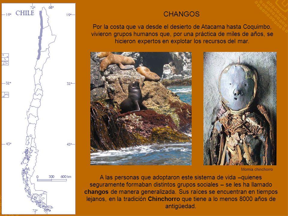 CHANGOS Por la costa que va desde el desierto de Atacama hasta Coquimbo, vivieron grupos humanos que, por una práctica de miles de años, se hicieron e