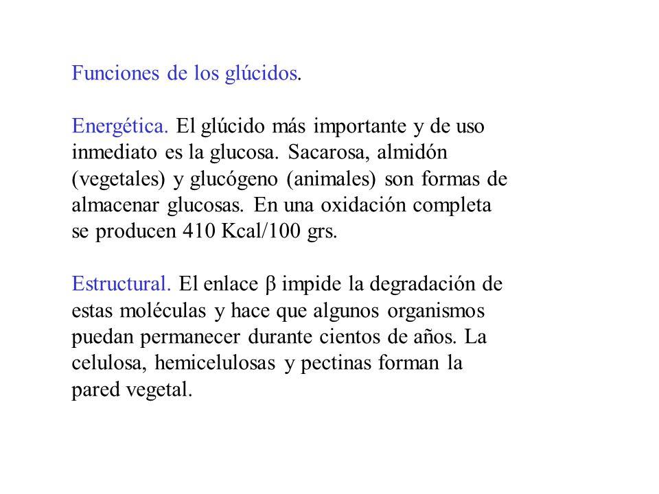 Los monosacáridos.Los monosacáridos son glúcidos sencillos, constituídos sólo por una cadena.