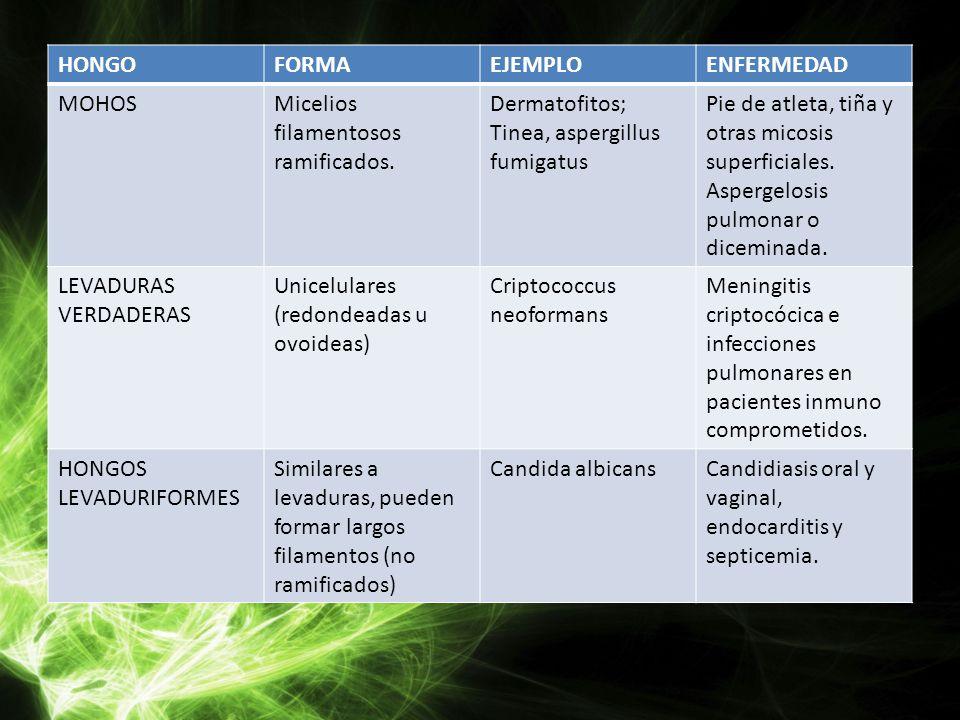 HONGOFORMAEJEMPLOENFERMEDAD MOHOSMicelios filamentosos ramificados. Dermatofitos; Tinea, aspergillus fumigatus Pie de atleta, tiña y otras micosis sup