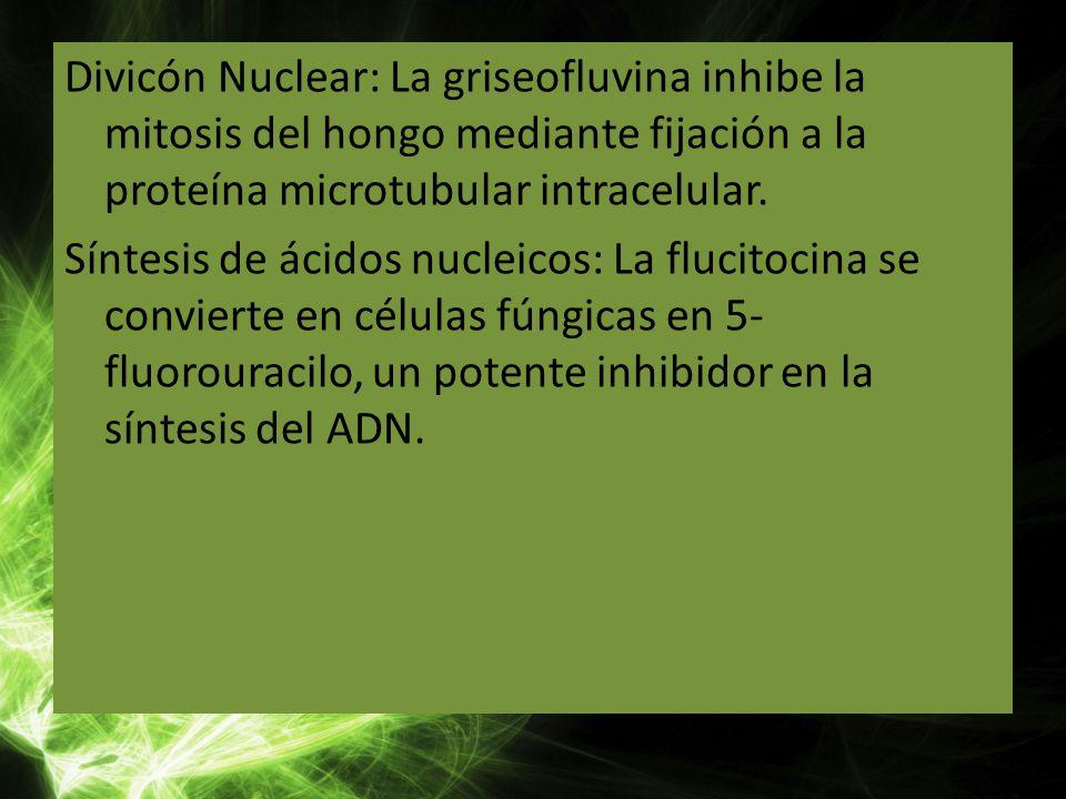 Divicón Nuclear: La griseofluvina inhibe la mitosis del hongo mediante fijación a la proteína microtubular intracelular. Síntesis de ácidos nucleicos: