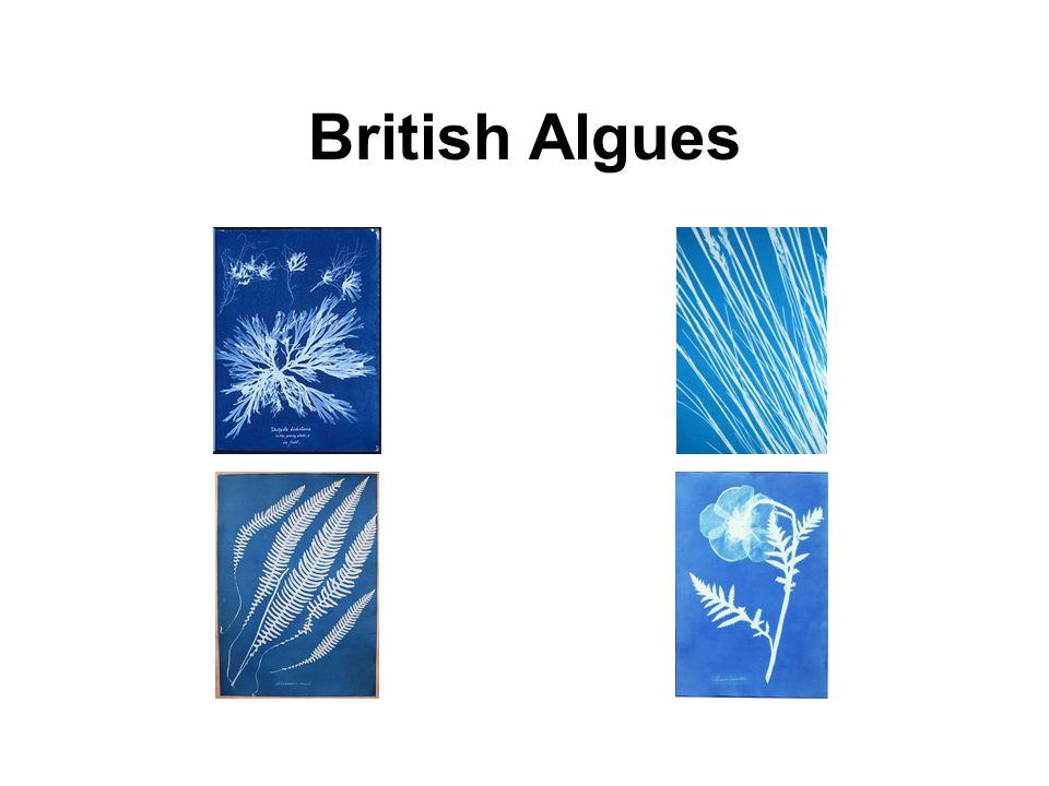 British Algues