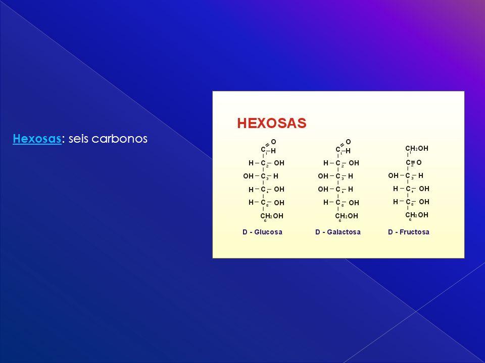 Hexosas Hexosas : seis carbonos