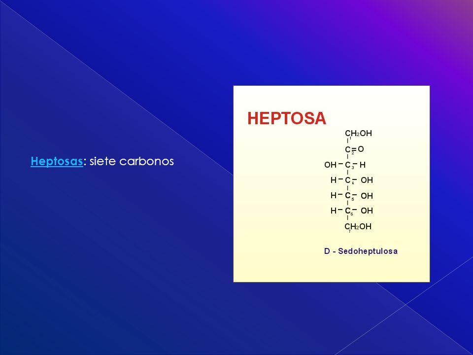 Heptosas Heptosas : siete carbonos