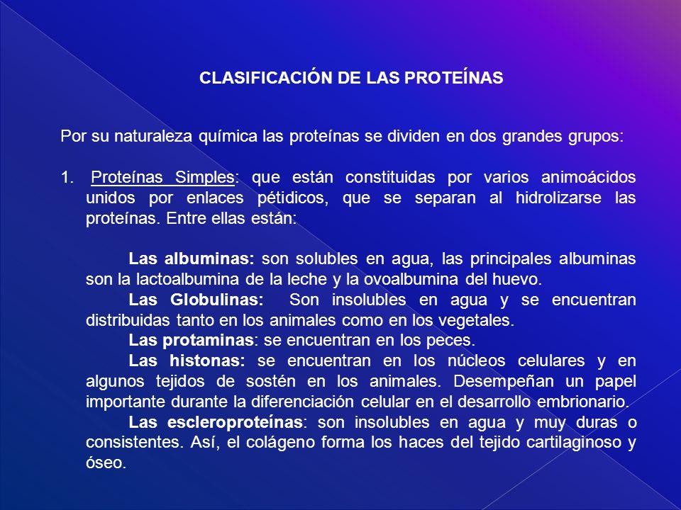 CLASIFICACIÓN DE LAS PROTEÍNAS Por su naturaleza química las proteínas se dividen en dos grandes grupos: 1. Proteínas Simples: que están constituidas