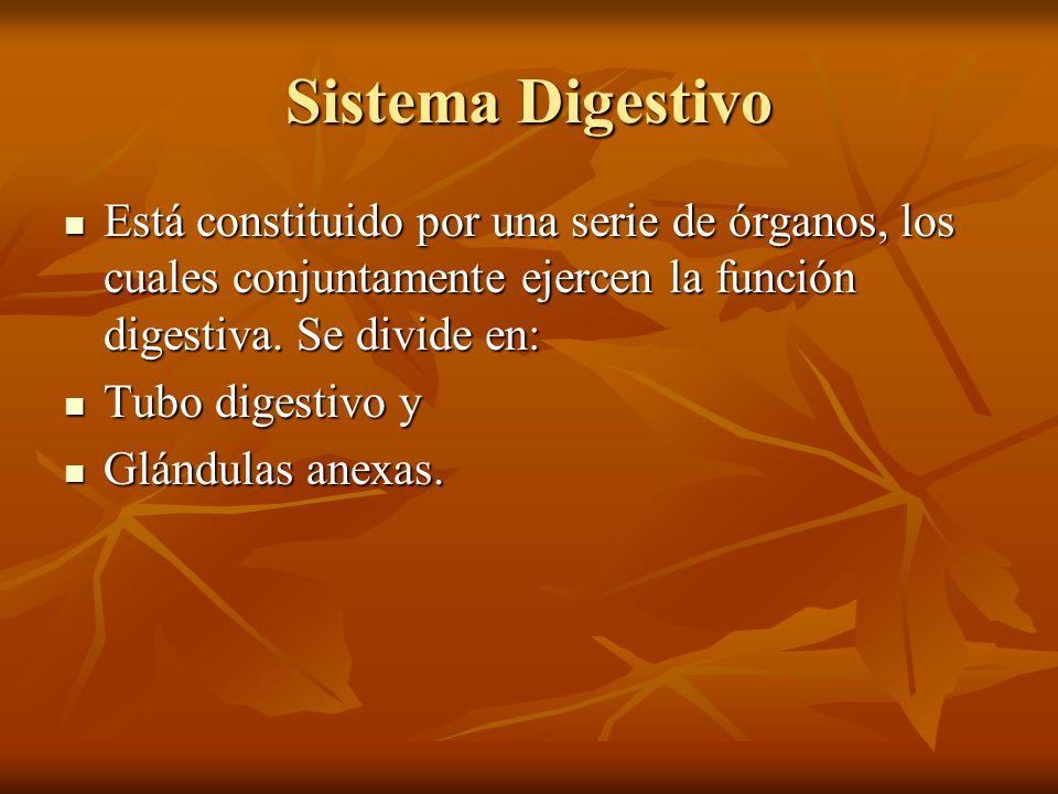 Sistema Digestivo Está constituido por una serie de órganos, los cuales conjuntamente ejercen la función digestiva. Se divide en: Está constituido por