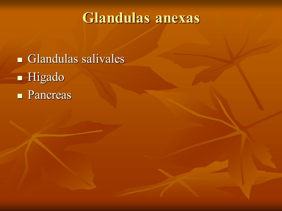 Glandulas anexas Glandulas salivales Glandulas salivales Higado Higado Pancreas Pancreas
