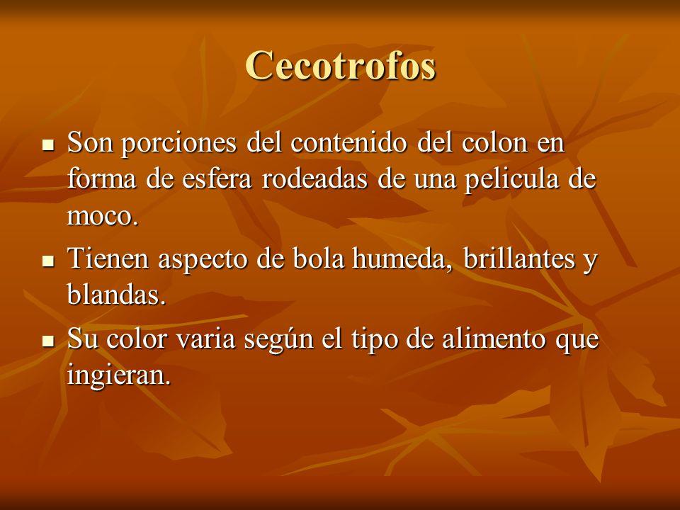 Cecotrofos Son porciones del contenido del colon en forma de esfera rodeadas de una pelicula de moco. Son porciones del contenido del colon en forma d