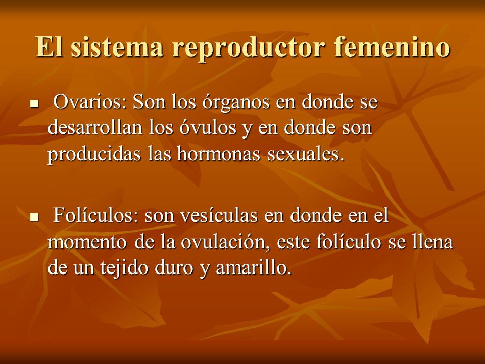 El sistema reproductor femenino Ovarios: Son los órganos en donde se desarrollan los óvulos y en donde son producidas las hormonas sexuales. Ovarios: