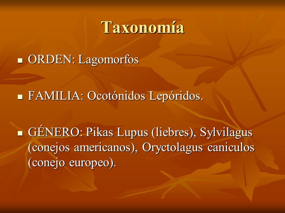 Taxonomía ORDEN: Lagomorfos ORDEN: Lagomorfos FAMILIA: Ocotónidos Lepóridos. FAMILIA: Ocotónidos Lepóridos. GÉNERO: Pikas Lupus (liebres), Sylvilagus