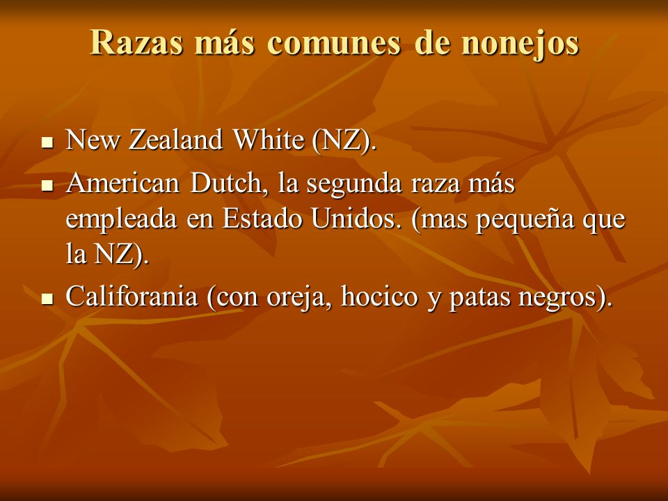 Razas más comunes de nonejos New Zealand White (NZ). New Zealand White (NZ). American Dutch, la segunda raza más empleada en Estado Unidos. (mas peque