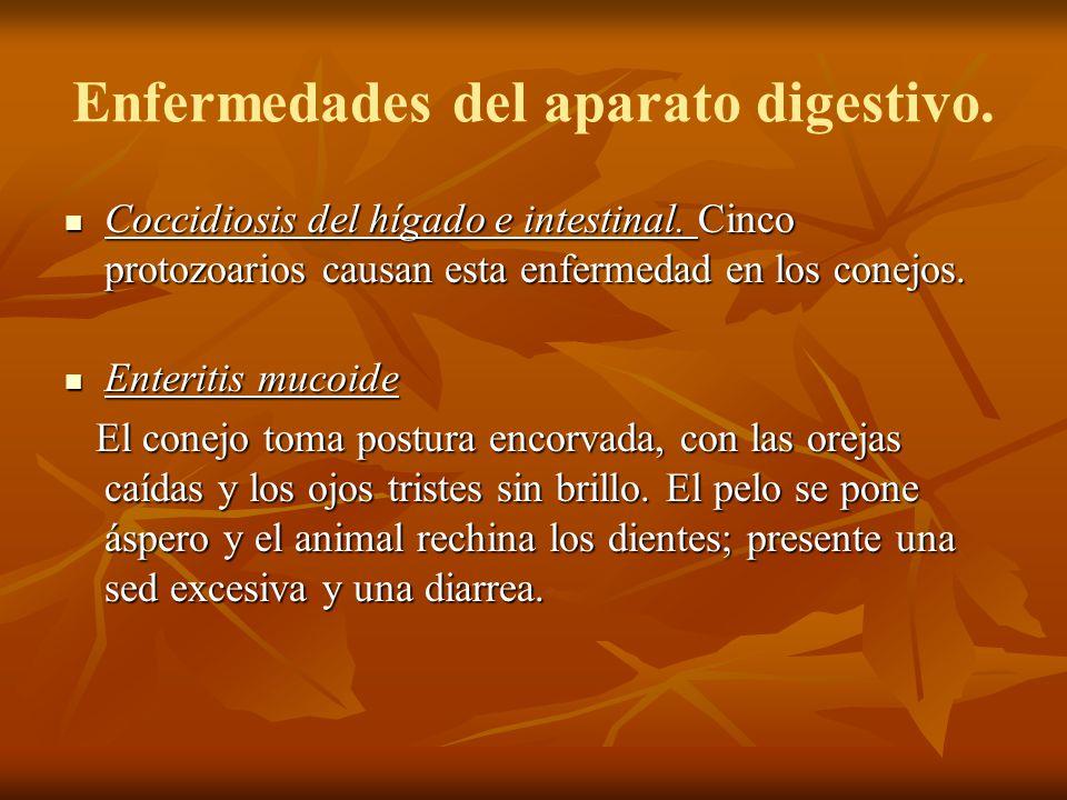 Enfermedades del aparato digestivo. Coccidiosis del hígado e intestinal. Cinco protozoarios causan esta enfermedad en los conejos. Coccidiosis del híg