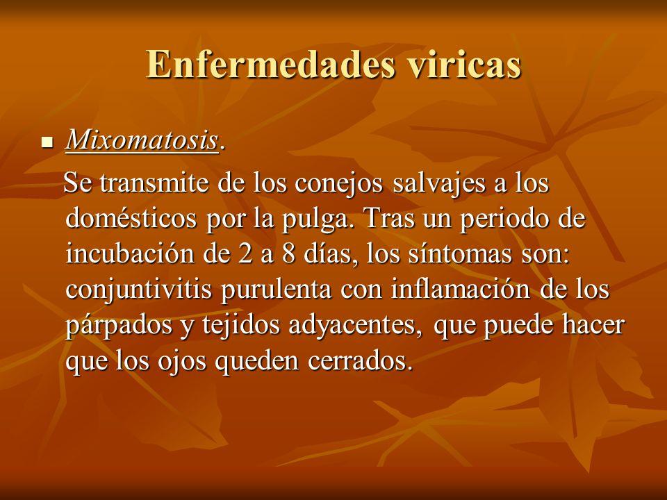Enfermedades viricas Mixomatosis. Mixomatosis. Se transmite de los conejos salvajes a los domésticos por la pulga. Tras un periodo de incubación de 2