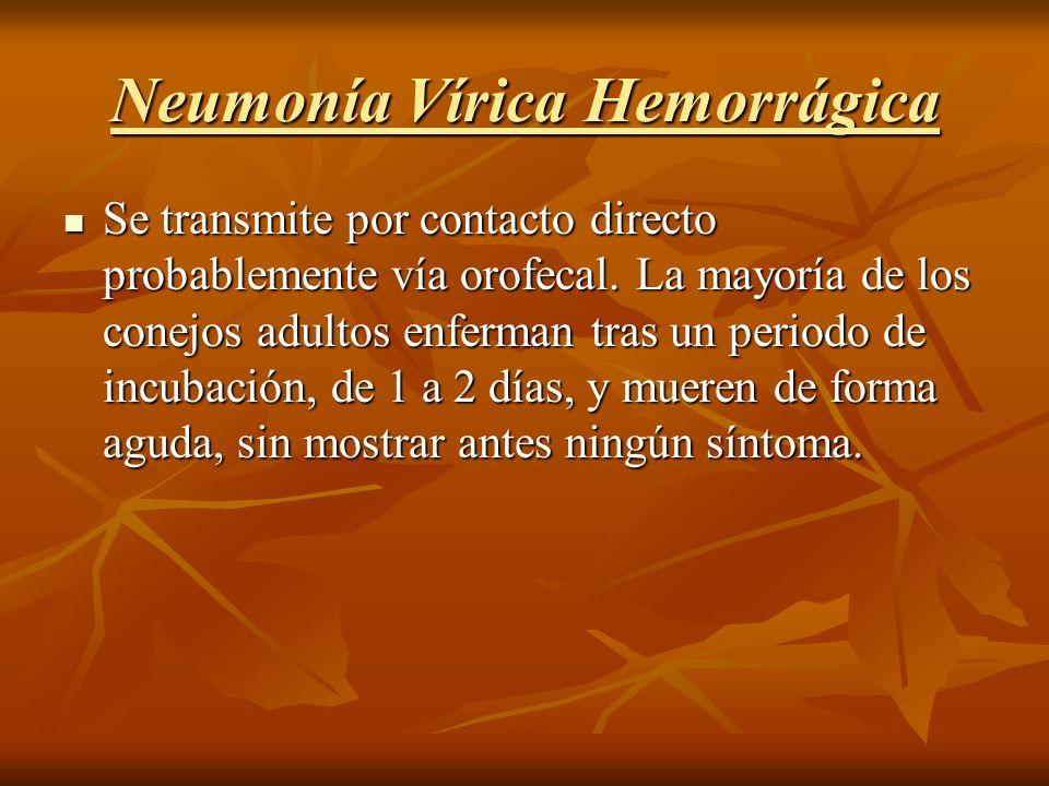 Neumonía Vírica Hemorrágica Se transmite por contacto directo probablemente vía orofecal. La mayoría de los conejos adultos enferman tras un periodo d