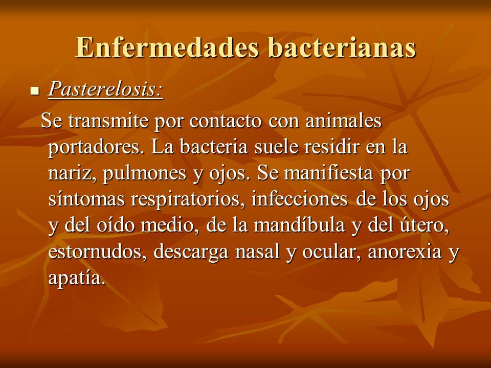 Enfermedades bacterianas Pasterelosis: Pasterelosis: Se transmite por contacto con animales portadores. La bacteria suele residir en la nariz, pulmone