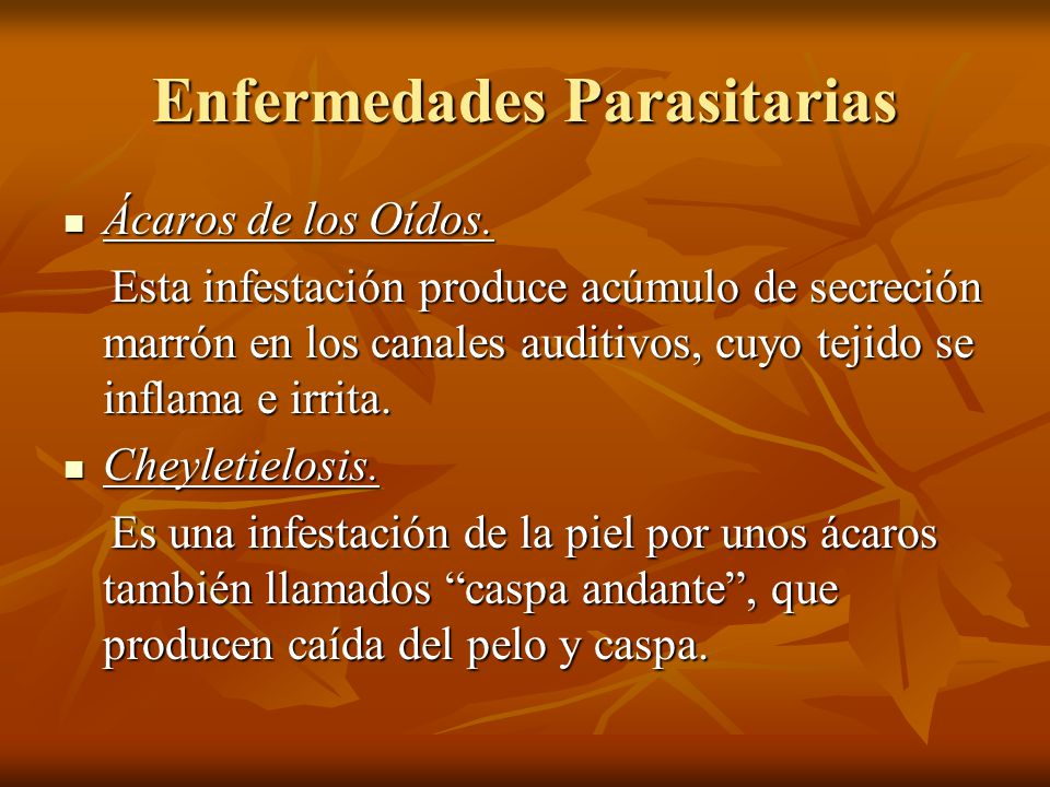 Enfermedades Parasitarias Ácaros de los Oídos. Ácaros de los Oídos. Esta infestación produce acúmulo de secreción marrón en los canales auditivos, cuy