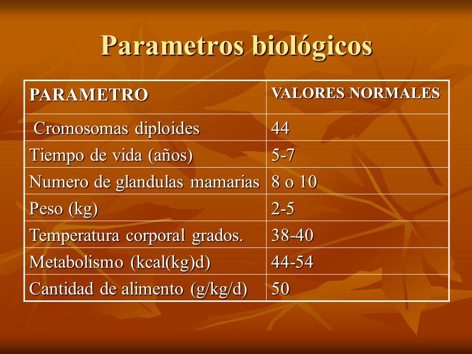 Parametros biológicos PARAMETRO VALORES NORMALES Cromosomas diploides Cromosomas diploides44 Tiempo de vida (años) 5-7 Numero de glandulas mamarias 8
