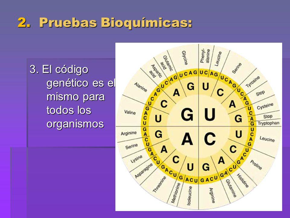 2. Pruebas Bioquímicas: 3. El código genético es el mismo para todos los organismos