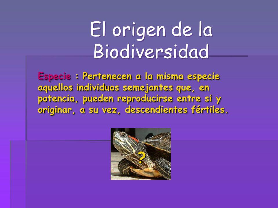 El origen de la Biodiversidad Especie : Pertenecen a la misma especie aquellos individuos semejantes que, en potencia, pueden reproducirse entre si y