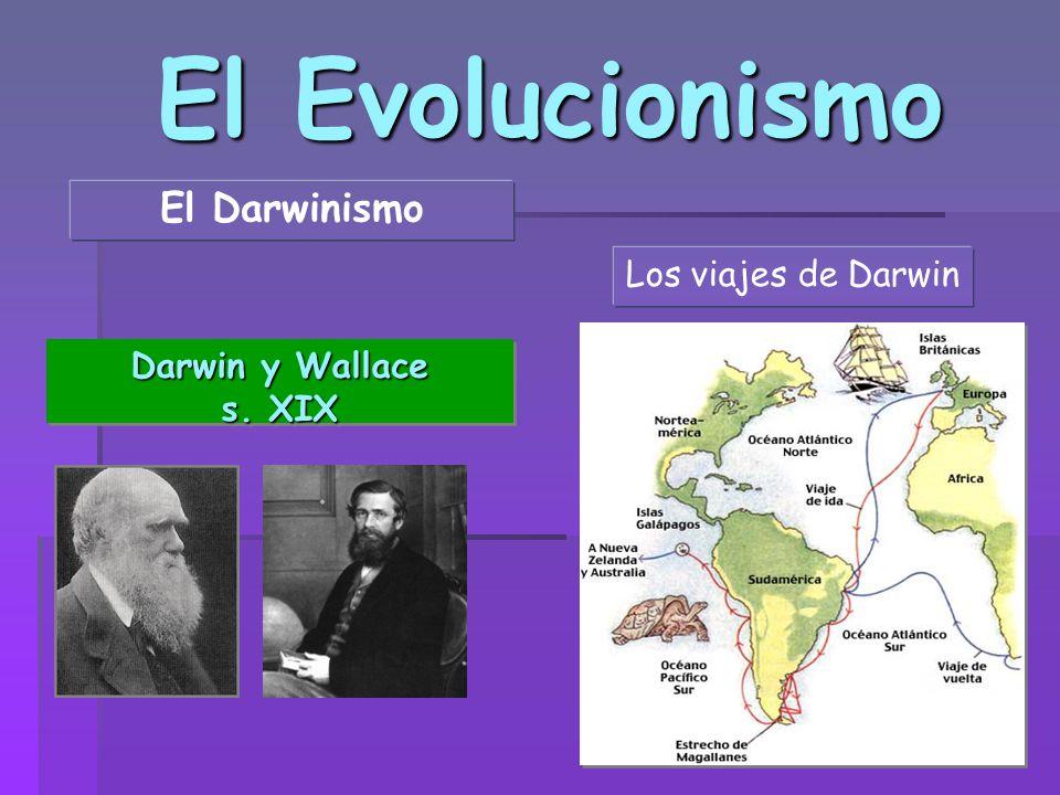 El Evolucionismo El Darwinismo Darwin y Wallace s. XIX Darwin y Wallace s. XIX Los viajes de Darwin
