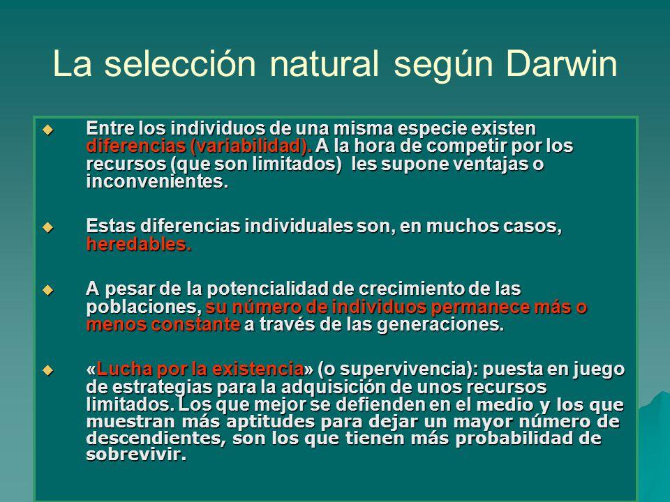 La selección natural según Darwin Entre los individuos de una misma especie existen diferencias (variabilidad). A la hora de competir por los recursos