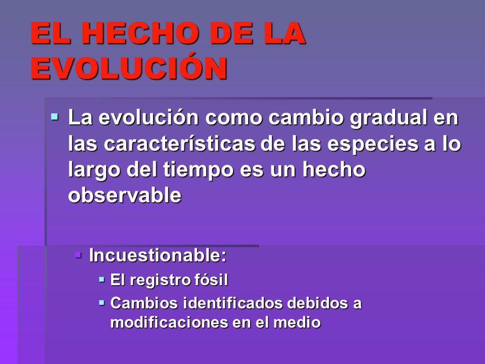 EL HECHO DE LA EVOLUCIÓN La evolución como cambio gradual en las características de las especies a lo largo del tiempo es un hecho observable La evolu