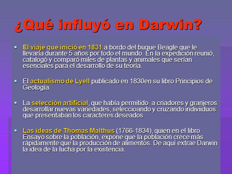 ¿Qué influyó en Darwin? El viaje que inició en 1831 a bordo del buque Beagle que le llevaría durante 5 años por todo el mundo. En la expedición reunió