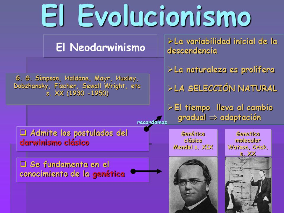 El Evolucionismo El Neodarwinismo G. G. Simpson, Haldane, Mayr, Huxley, Dobzhansky, Fischer, Sewall Wright, etc s. XX (1930 -1950) G. G. Simpson, Hald