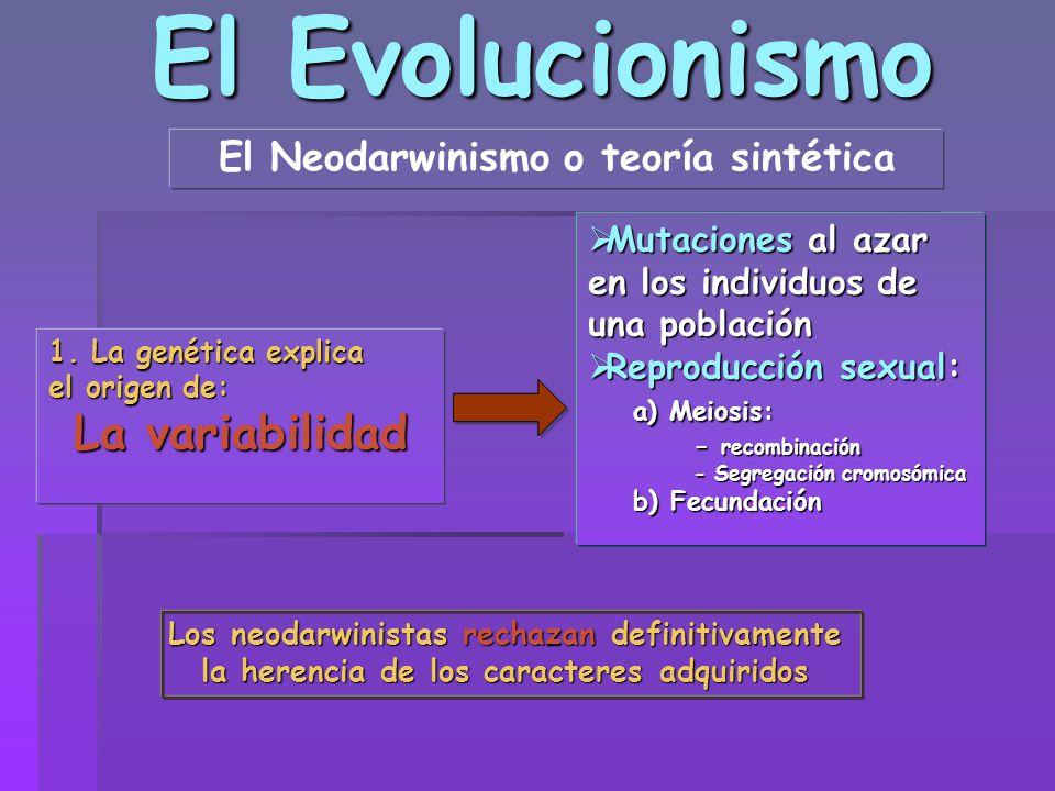 El Evolucionismo El Neodarwinismo o teoría sintética 1. La genética explica el origen de: La variabilidad Mutaciones al azar en los individuos de una