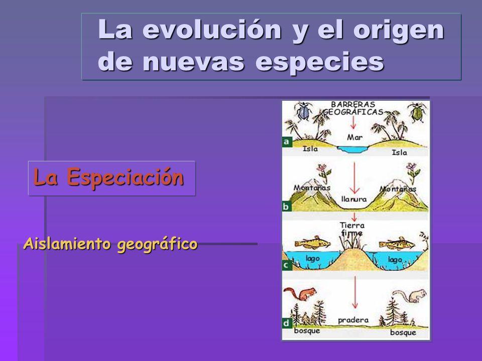 La Especiación Aislamiento geográfico La evolución y el origen de nuevas especies