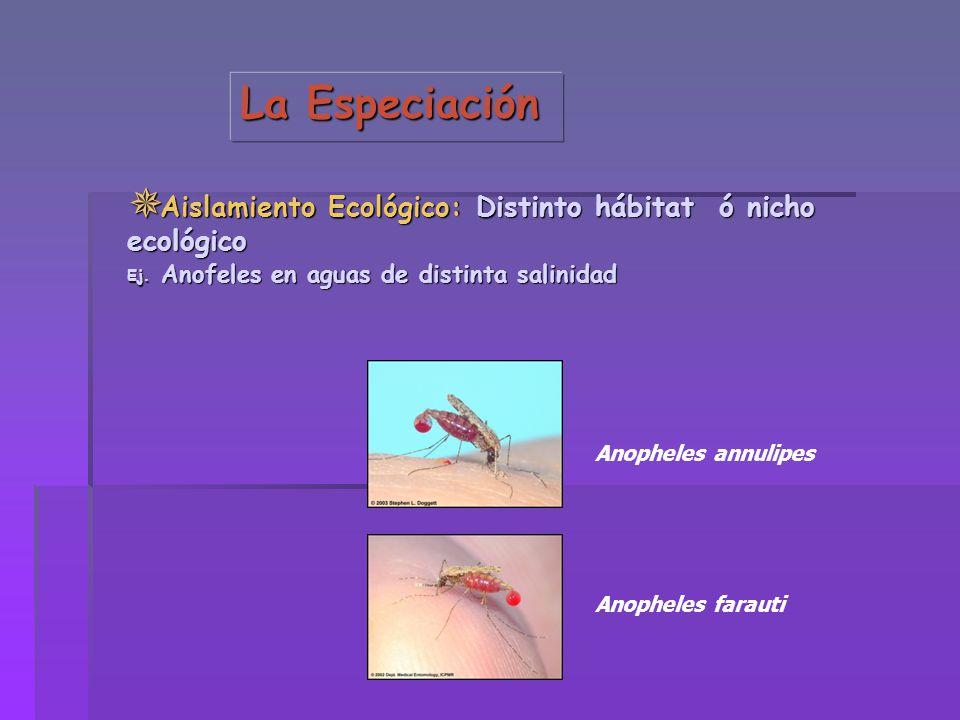 Aislamiento Ecológico: Distinto hábitat ó nicho ecológico Aislamiento Ecológico: Distinto hábitat ó nicho ecológico Ej. Anofeles en aguas de distinta