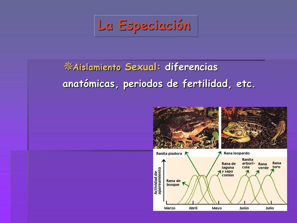La Especiación Aislamiento Sexual: diferencias anatómicas, periodos de fertilidad, etc. Aislamiento Sexual: diferencias anatómicas, periodos de fertil