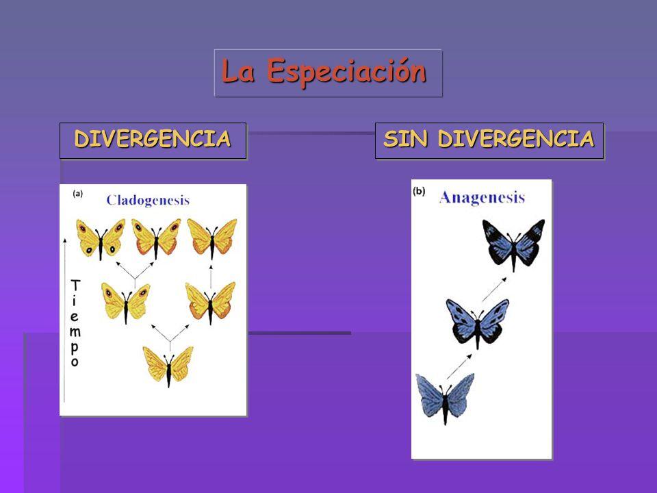La Especiación DIVERGENCIADIVERGENCIA SIN DIVERGENCIA