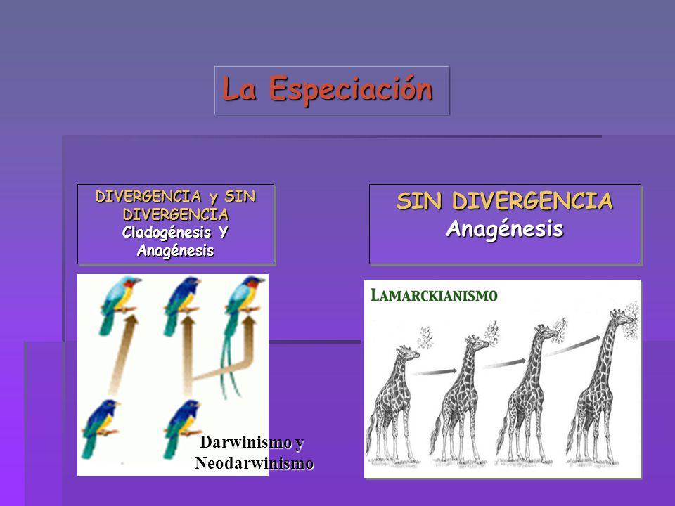 La Especiación DIVERGENCIA y SIN DIVERGENCIA Cladogénesis Y Anagénesis DIVERGENCIA y SIN DIVERGENCIA Cladogénesis Y Anagénesis SIN DIVERGENCIA Anagéne