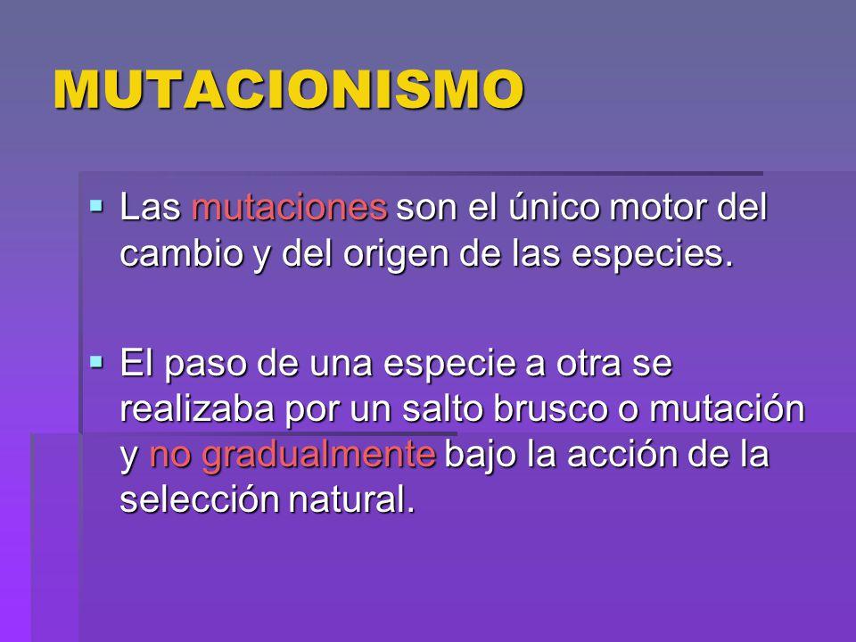 MUTACIONISMO Las mutaciones son el único motor del cambio y del origen de las especies. Las mutaciones son el único motor del cambio y del origen de l