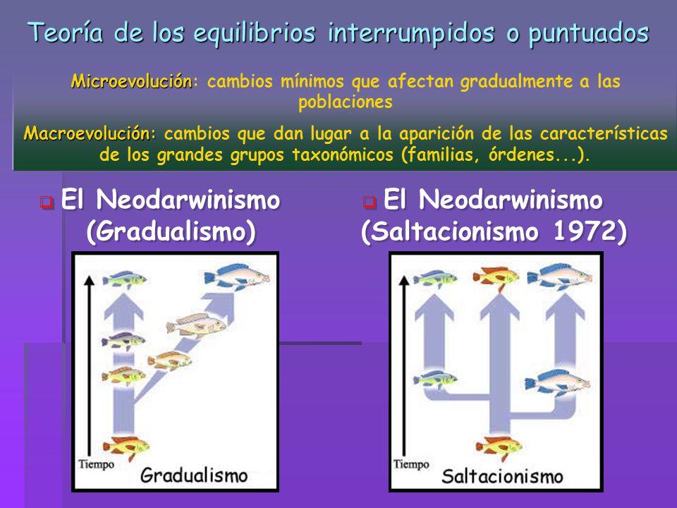 Teoría de los equilibrios interrumpidos o puntuados El Neodarwinismo (Gradualismo) El Neodarwinismo (Gradualismo) El Neodarwinismo (Saltacionismo 1972