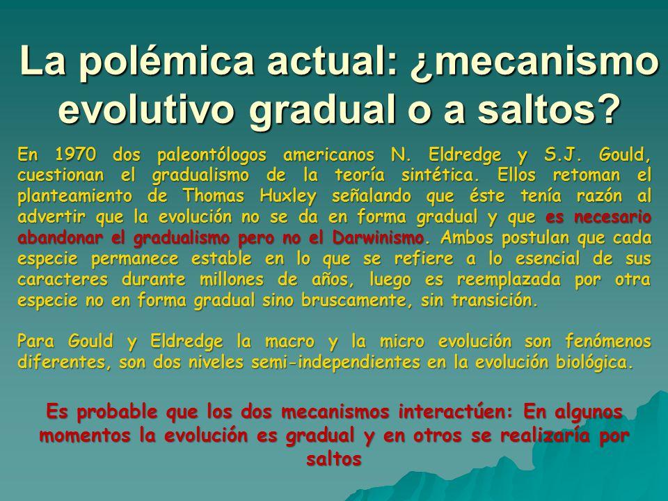 La polémica actual: ¿mecanismo evolutivo gradual o a saltos? En 1970 dos paleontólogos americanos N. Eldredge y S.J. Gould, cuestionan el gradualismo