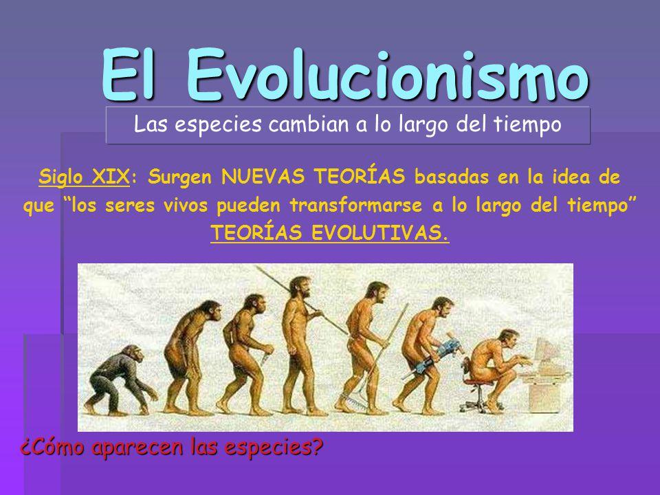El Evolucionismo Las especies cambian a lo largo del tiempo ¿Cómo aparecen las especies? Siglo XIX: Surgen NUEVAS TEORÍAS basadas en la idea de que lo