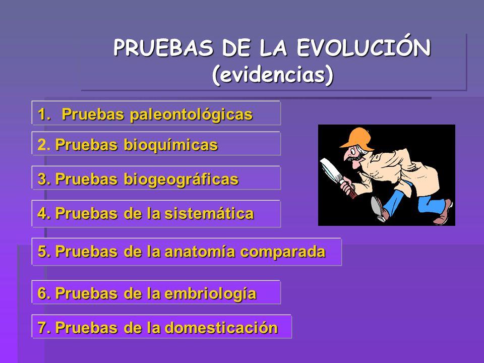 PRUEBAS DE LA EVOLUCIÓN (evidencias) 1.Pruebas paleontológicas 7. Pruebas de la domesticación 4. Pruebas de la sistemática Pruebas bioquímicas 2. Prue