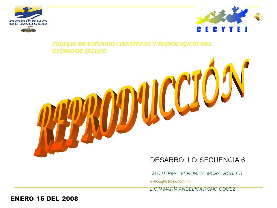 DESARROLLO SECUENCIA 6 M.C.D IRMA VERONICA MORA ROBLES ivm08@hotmail.com.mx L.C.N MARÍA ANGELICA ROMO GOMEZ ENERO 15 DEL 2008 COLEGIO DE ESTUDIOS CIENTIFICOS Y TEGNOLOGICOS DEL ESTADO DE JALISCO