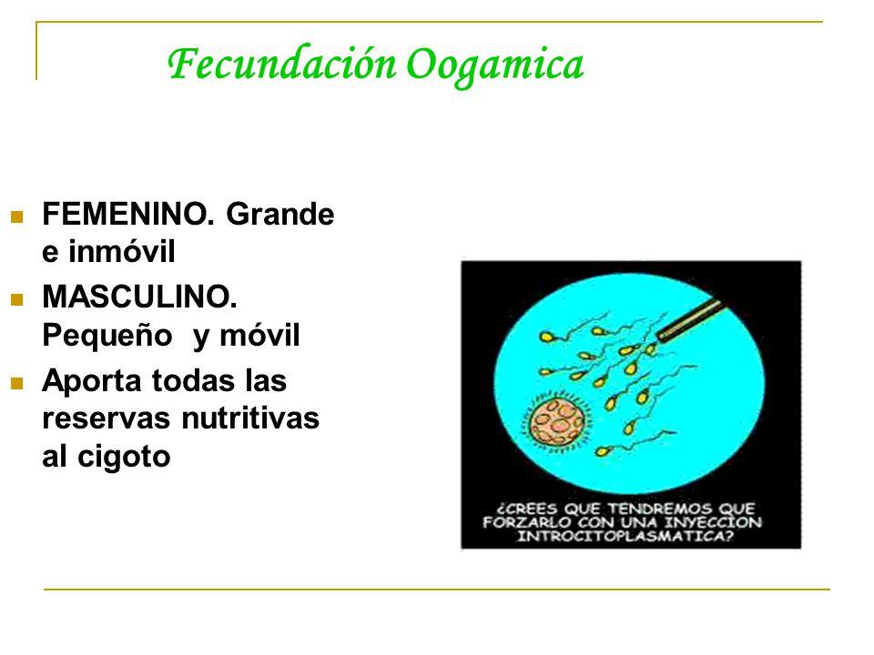 Fecundación Oogamica FEMENINO.Grande e inmóvil MASCULINO.