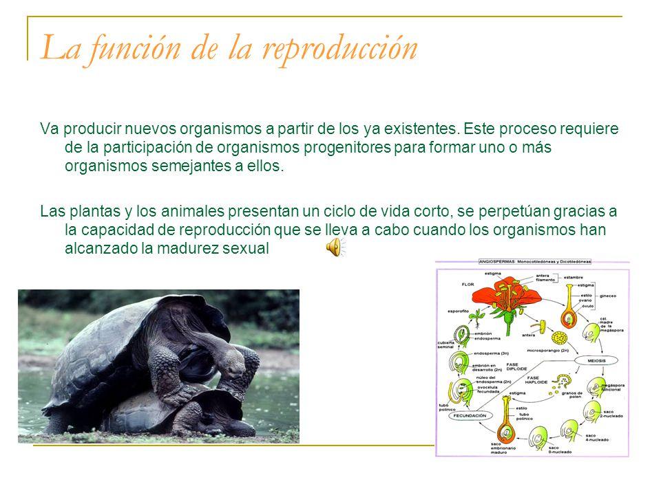 La función de la reproducción Va producir nuevos organismos a partir de los ya existentes.