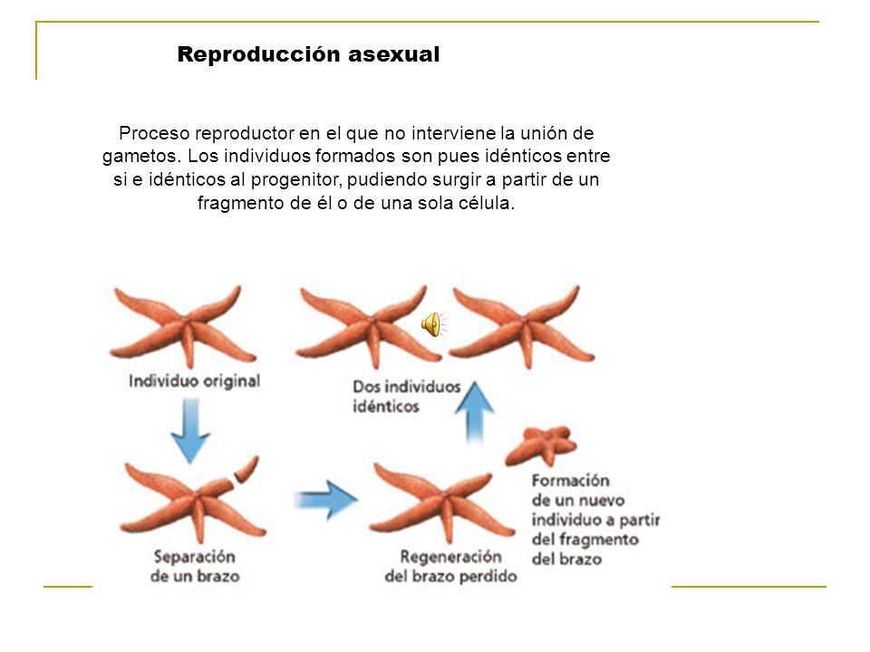La Conjugación Es un tipo de fecundación que puede ocurrir en las bacterias, algas y otros organismos inferiores, que se produce por la transferencia o intercambio de material genético entre dos células o por su fusión en una.
