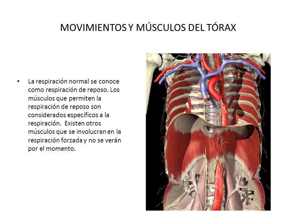 MOVIMIENTOS Y MÚSCULOS DEL TÓRAX La respiración normal se conoce como respiración de reposo. Los músculos que permiten la respiración de reposo son co