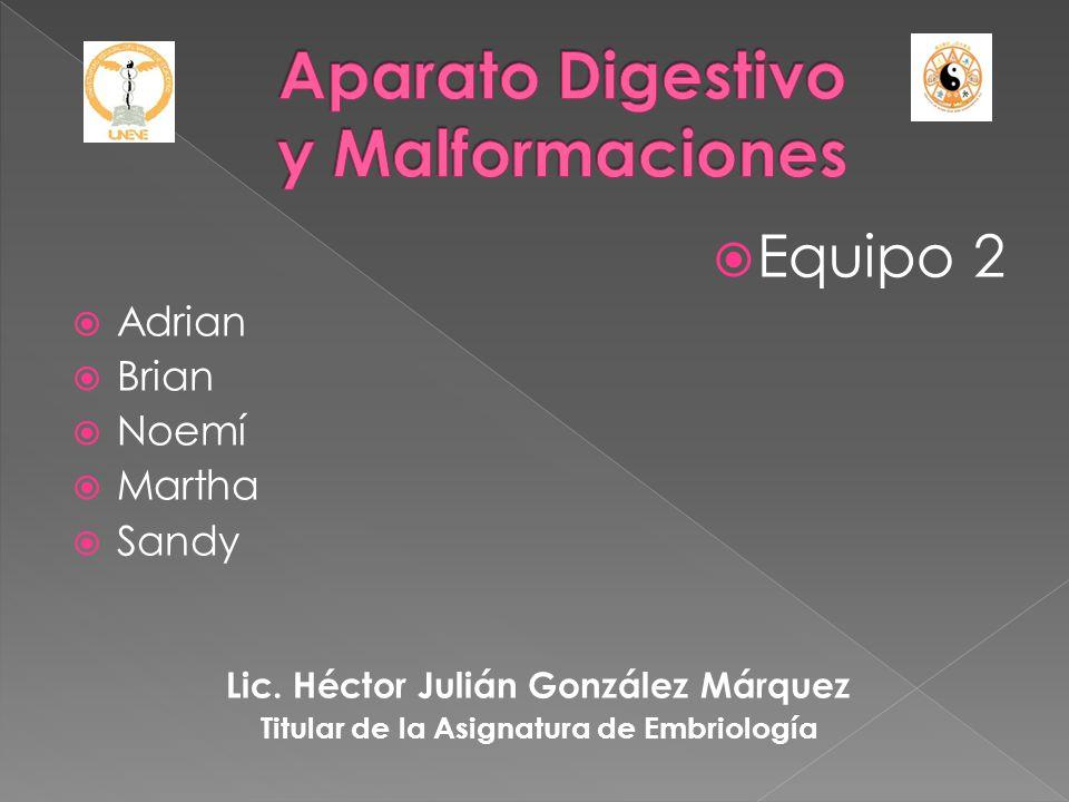 Equipo 2 Adrian Brian Noemí Martha Sandy Lic. Héctor Julián González Márquez Titular de la Asignatura de Embriología