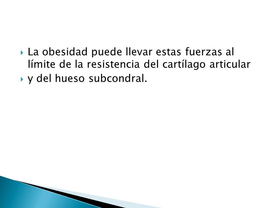 La obesidad puede llevar estas fuerzas al límite de la resistencia del cartílago articular y del hueso subcondral.