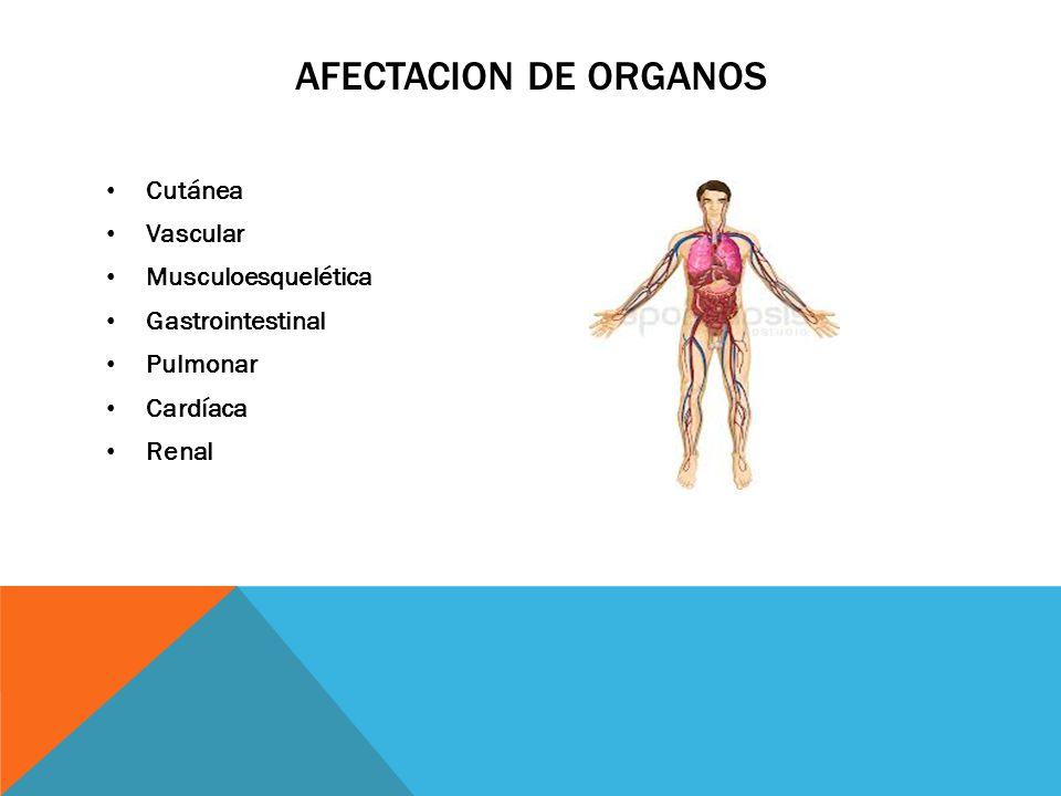 AFECTACION DE ORGANOS Cutánea Vascular Musculoesquelética Gastrointestinal Pulmonar Cardíaca Renal