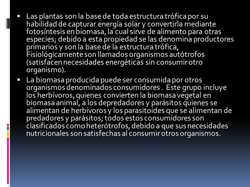 Las plantas son la base de toda estructura trófica por su habilidad de capturar energía solar y convertirla mediante fotosíntesis en biomasa, la cual sirve de alimento para otras especies; debido a esta propiedad se las denomina productores primarios y son la base de la estructura trófica, Fisiológicamente son llamados organismos autótrofos (satisfacen necesidades energéticas sin consumir otro organismo).
