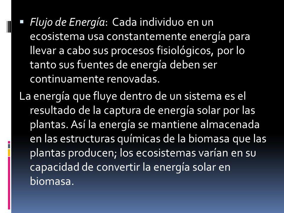 Flujo de Energía: Cada individuo en un ecosistema usa constantemente energía para llevar a cabo sus procesos fisiológicos, por lo tanto sus fuentes de energía deben ser continuamente renovadas.